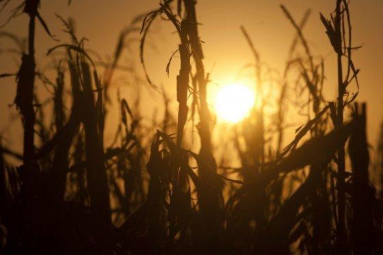 Altas temperaturas, foto vía AFP