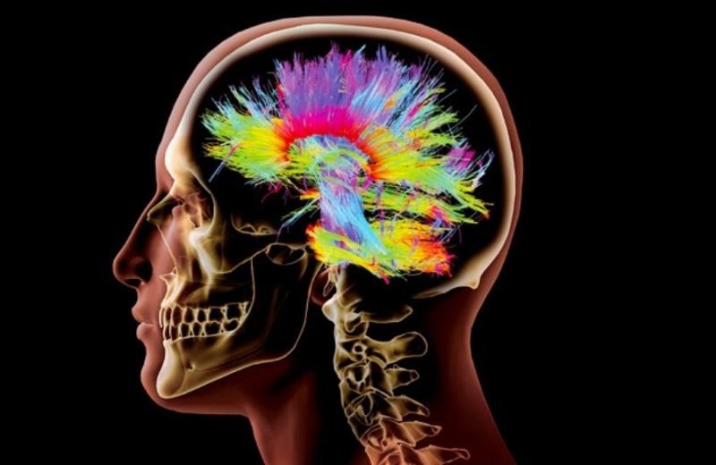 cerebro-neuronas Muhimues