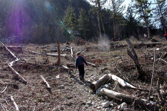 deforestación, foto vía El Espectador