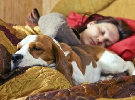 dormir mascota Muhimu
