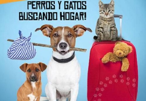 adopción perros y gatos bogotá