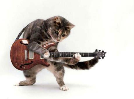 gato-guitarra, foto vía Tumblr thecatmaster999