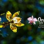 Las orquídeas se toman el Jardín Botánico de Bogotá
