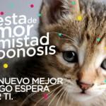 Adopta no compres: 100 gatos y perros buscan un amoroso hogar
