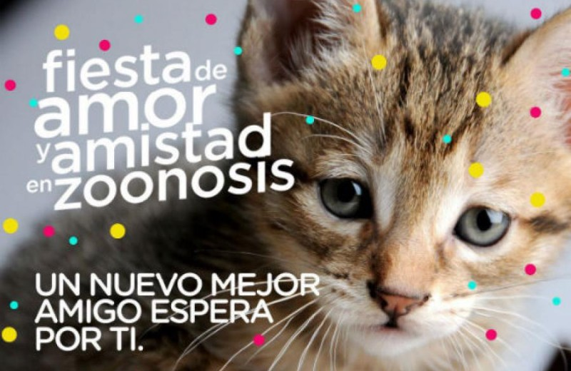 adopcion-de-perros-y-gatos-foto-via-alcaldia-de-bogota