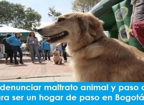 Cómo denunciar maltrato animal y paso a paso para ser un hogar de paso en Bogotáfoto-vía-web-Alcaldía-de-Bogotá-800x520 radio universitaria urepublicanaradio