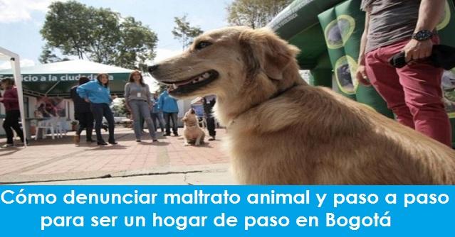 Cómo denunciar maltrato animal y paso a paso para ser un hogar de paso un perro en Bogotá
