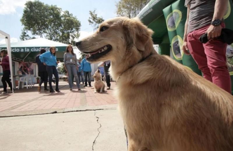 Perro zoonosis, foto vía web Alcaldía de Bogotá
