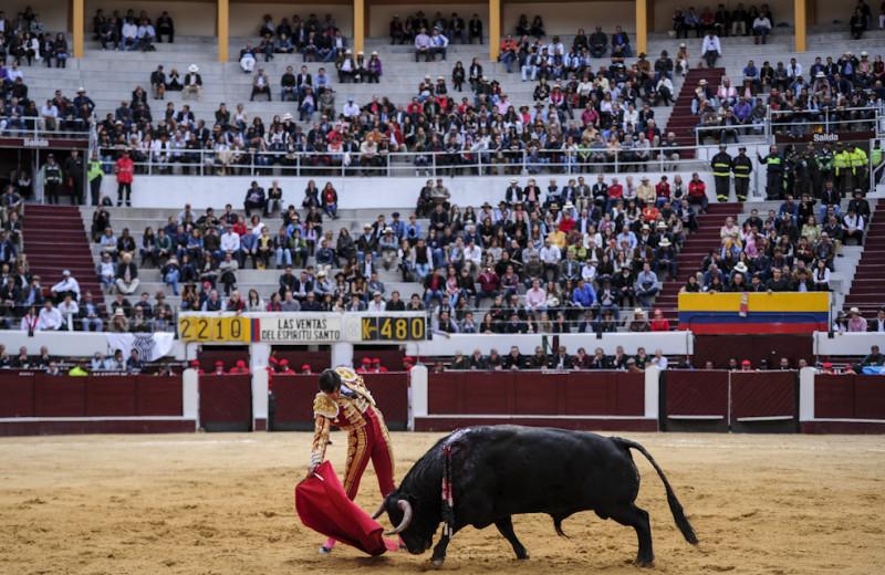 corrida de toros Espectador antitaurina consulta corridas prohibir