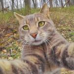 ¡Felicidades a los gatos del mundo! 9 curiosidades del Día Internacional del Gato