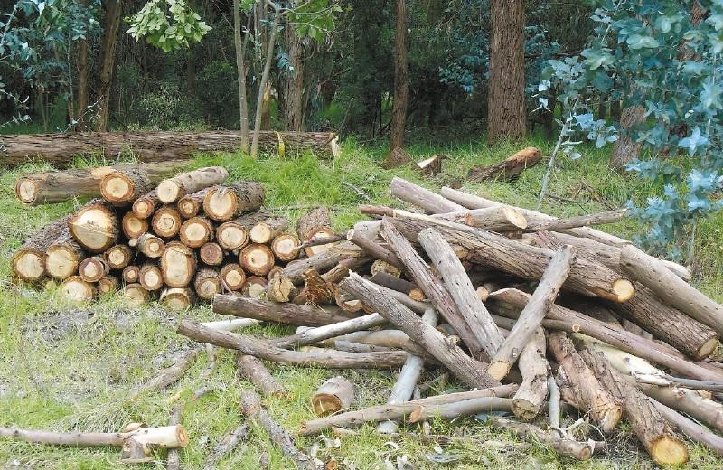 Se talarán árboles en predios de Bavaria a pesar de petición ciudadana