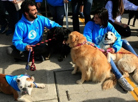 Instituto de Protección y Bienestar Animal en Bogotá, foto vía web Alcaldía de Bogotá - Radio Universitaria somos URepublicanaRadio
