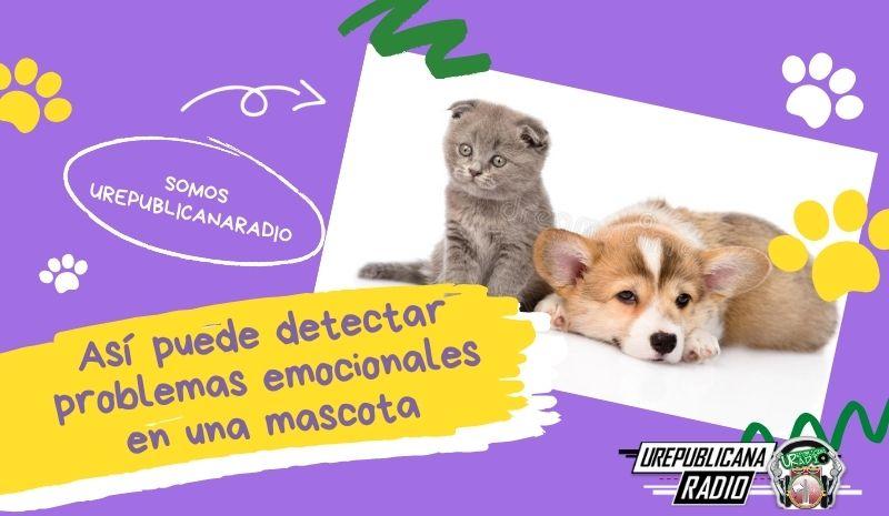 Así puede detectar problemas emocionales en una mascota